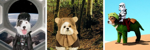 6 Adorable Star Wars Costumes for Dogs
