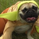 Star Wars Pet Costumes Movie Trailer