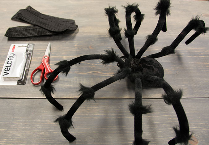 How to make your own spider dog costume halloween costume ideas keep on scrolling for our tutorial on how to make your own diy spider dog costume solutioingenieria Choice Image